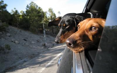 Dica de Viagem com Animais