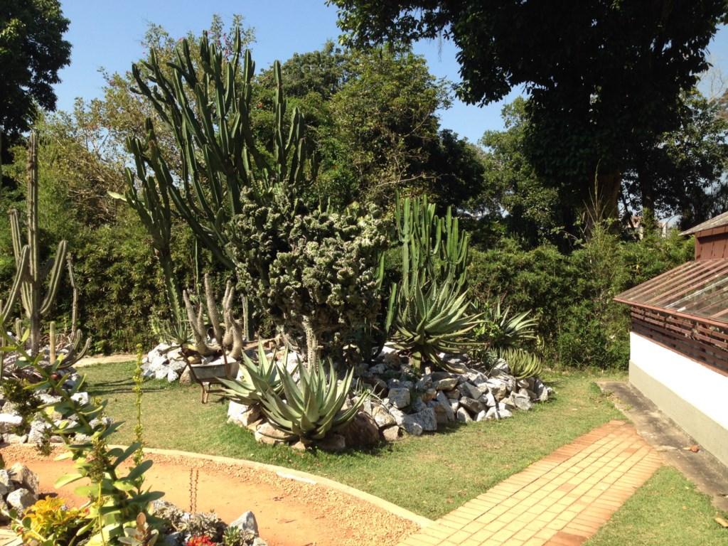 fotos jardim botanico rio de janeiro:Jardim Botânico do Rio de Janeiro apresenta o Projeto Rio Natureza