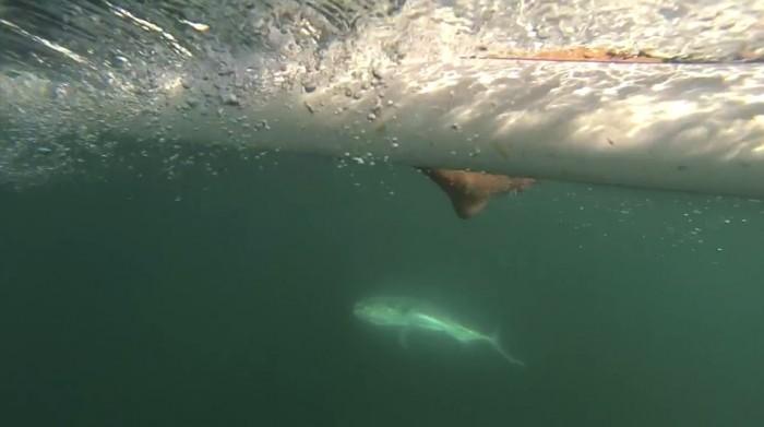 sup-fishing-costa-rica-3