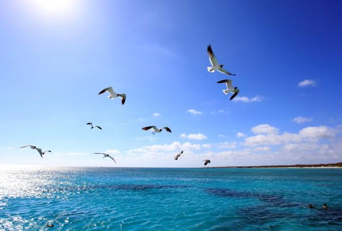 Aruba - Observacao de passaros 6