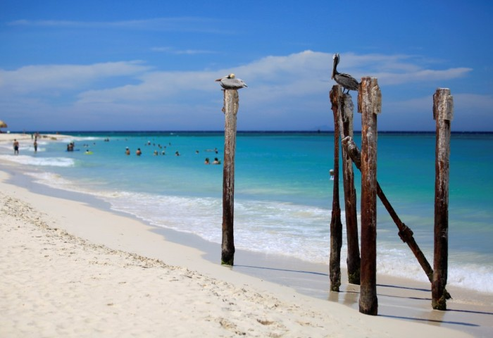 Aruba - Observacao de passaros