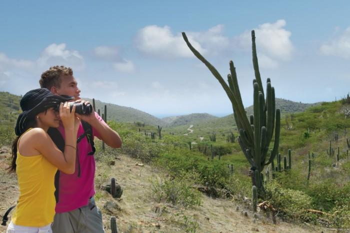 Aruba - Observacao de passaros no Parque Arikok