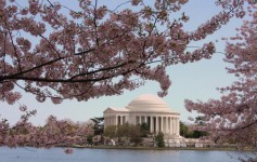 Festival da Primavera nos EUA