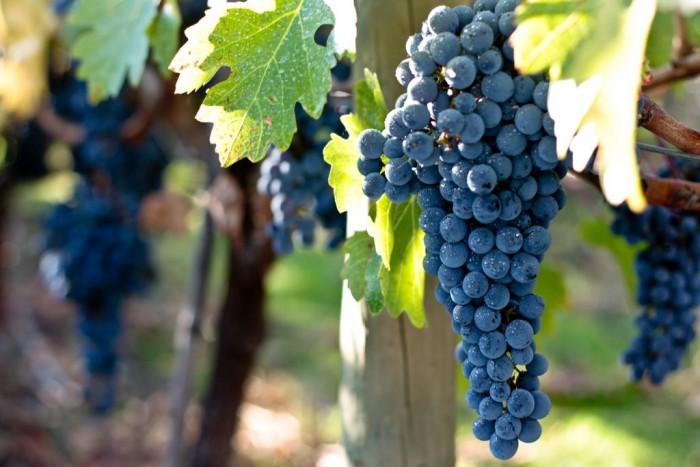 Vina Vik Chile vinho uva vinicola chile