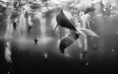 Whale Whisperers - National Geographic Traveler 2015