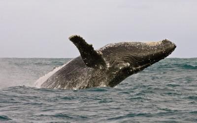 Observação de Baleias em Hermanus