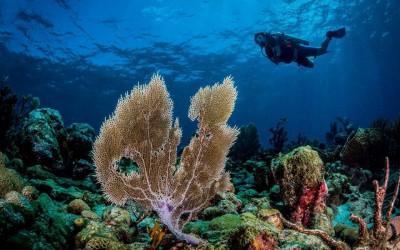 Mergulho em Tobago