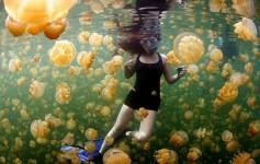 #17 Água-Viva, Ilhas Palau