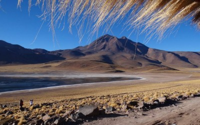 Atacama, Laguna Miscanti - Por Marcio Vital