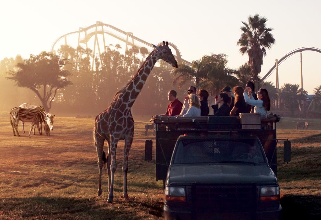 Tudo sobre o Busch Gardens Tampa Bay