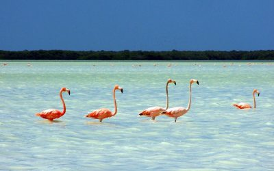 Isla Holbox - México