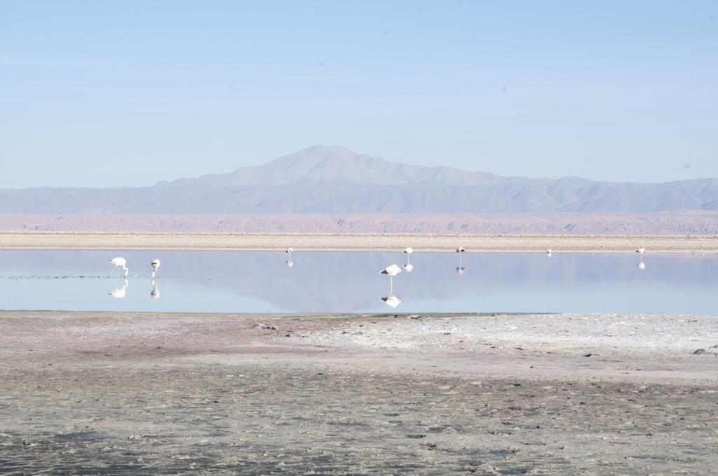 Reserva Nacional Los Flamencos Laguna de Chaxa