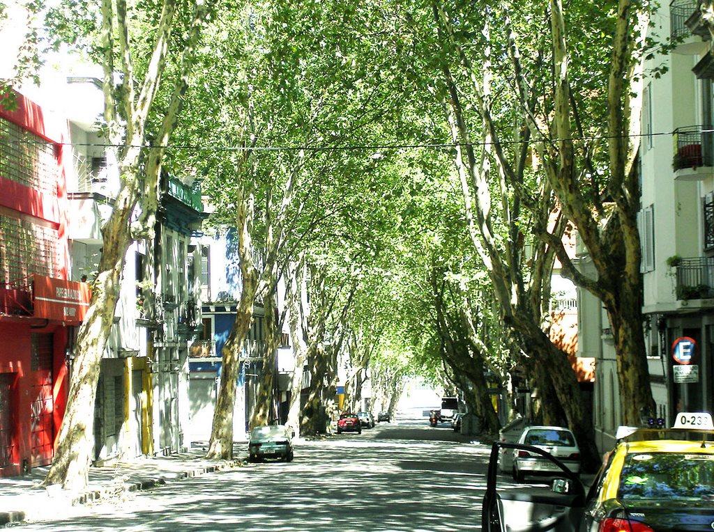 Montevidéu, árvores por todos os lados