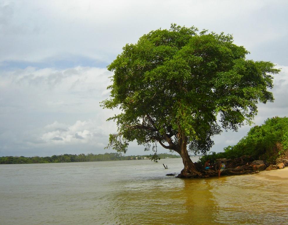 Ilha de Marajó - Uma das belas paisagens da ilha