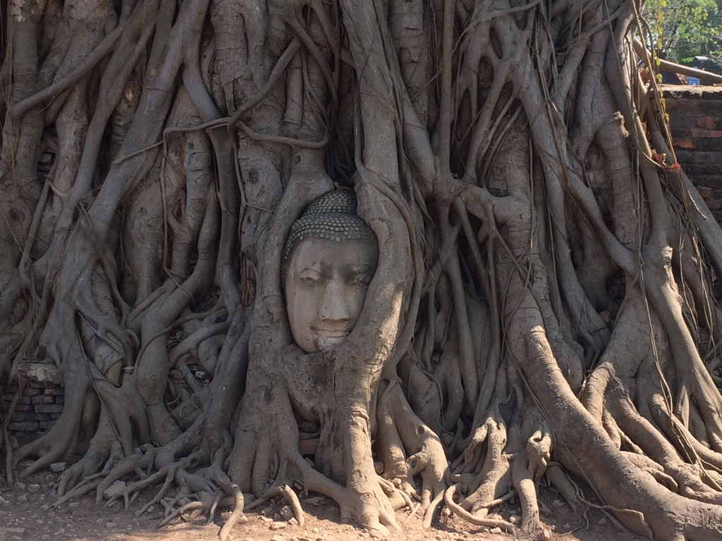 O Buda escondido entre as raizes em Ayutthaya