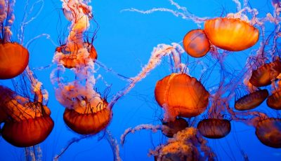 Monterey, Monterey Bay Aquarium