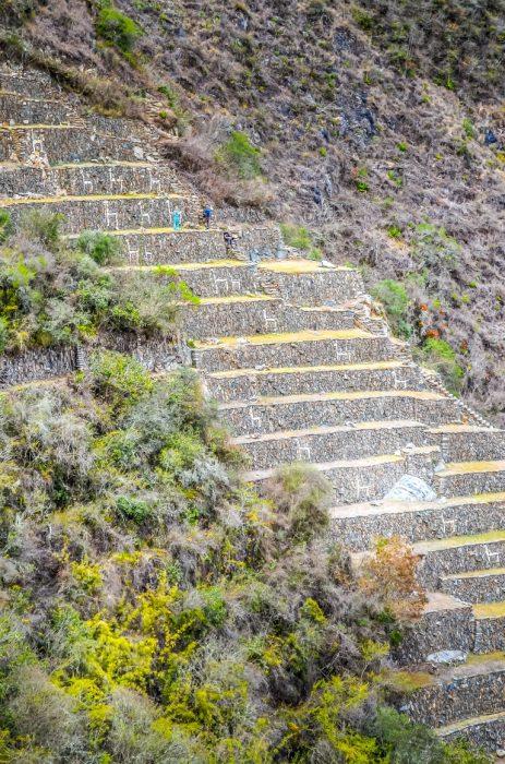 Terraço das lhamas em Choquequirao