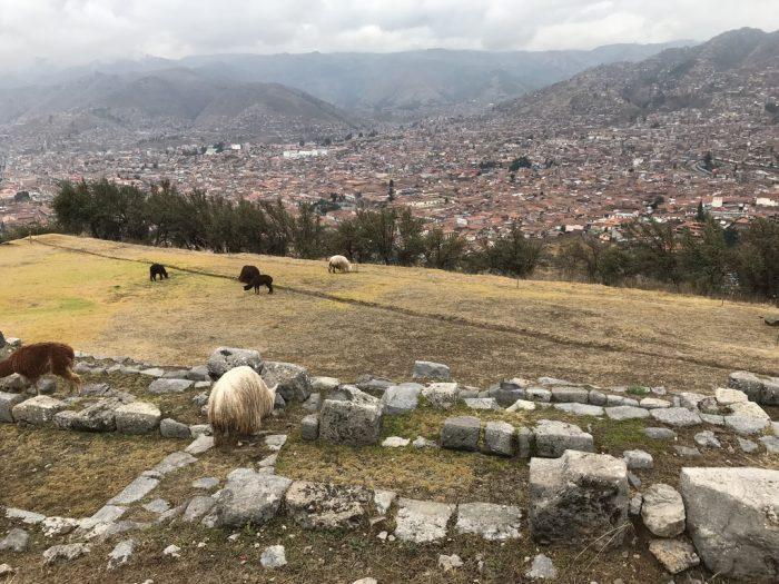 Sacsayhumán, as lhamas e Cusco ao fundo