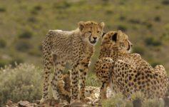 Sanbona Wildlife Reserve - safáris próximo a Cape Town