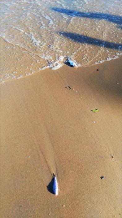 Poluição leva peixes mortos a praia