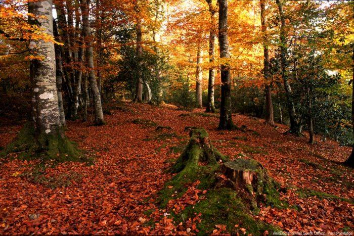 Bovey Valley - Dartmoor