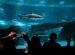 AquaRio - Aquario Marinho do RJ
